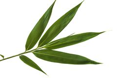 Green bamboo leaf stock image
