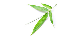 Green Bamboo Leaf Isolated Royalty Free Stock Images