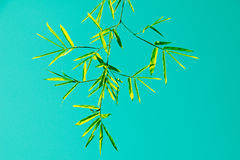 Green bamboo leaf and sky vintage filter style stock photography