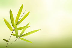 Green bamboo leaf and soft light green background Stock Photos