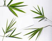 Green bamboo leaf on white background. Spa or beauty banner template with place for text. Royalty Free Stock Images