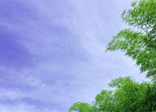 Green bamboo leafs on a blue sky background Stock Images