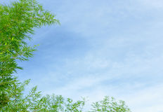 Green bamboo leafs on a blue sky background Stock Photography