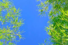 Free Green Bamboo Leaves Royalty Free Stock Photo - 105292465