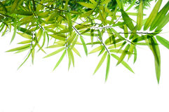 Green bamboo leaves. Arrangement Green bamboo leaves background Royalty Free Stock Photos