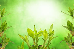 Green bamboo leaves stock images