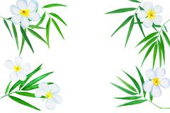 Green bamboo leaves ad plumeria flowers watercolor illustration. Handdrawn zen oriental background. Oriental banner template with text place. Tropical floral Royalty Free Stock Image