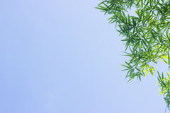 Green bamboo leaves or background .Green Energy. Royalty Free Stock Photography