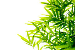 Green bamboo leaves background isolated royalty free stock photo