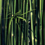 Green Bamboo. With leaves and black Background stock illustration