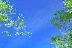 Green bamboo leaves. On a white background Royalty Free Stock Photo