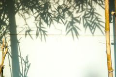 Green bamboo leaves leaving shadows against a soft focus on white wall . Interesting abstract Eastern background for text stock photos