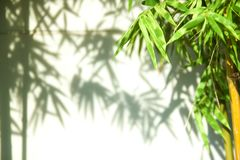 Green bamboo leaves leaving shadows against a soft focus on white wall . Interesting abstract Eastern background for text stock images