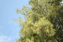 Green bamboo leaves in nature garden Stock Photos