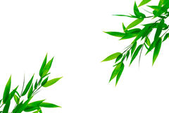 Green bamboo leaves on a white background Royalty Free Stock Photography