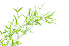 Green bamboo leaves Royalty Free Stock Photos