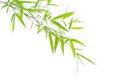 Green bamboo leaves. On a white background Stock Images