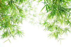 Green bamboo leaves Stock Image