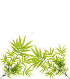Green bamboo leaves on white Stock Photography