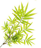 Green bamboo leaves on white Royalty Free Stock Photo