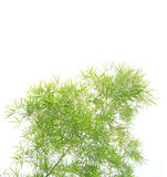 Green bamboo leaves on white Stock Photo