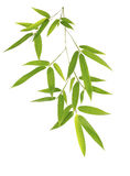 Green bamboo leaves  on white background Royalty Free Stock Photo