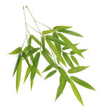 Green bamboo leaves  on white background Royalty Free Stock Images