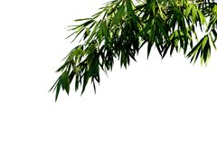 Bamboo leaves background. stock photo