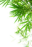 Green bamboo leaves on white background Royalty Free Stock Photos