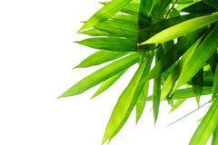 Green bamboo leaves with white background Royalty Free Stock Photo