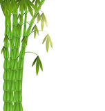 Green Bamboo left side on white background Royalty Free Stock Photos
