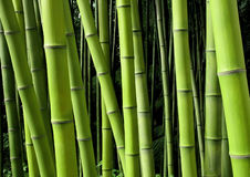 Green bamboo nature backgrounds Royalty Free Stock Photos