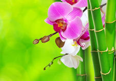 Green bamboo and orchid Stock Image