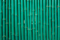 Green bamboo pattern Stock Photography
