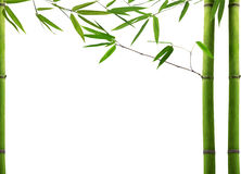 Green Bamboo Plant On White Background Stock Image