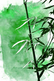Green bamboo plant Stock Photo