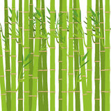 Green bamboo plant Royalty Free Stock Photos