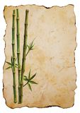 Green bamboo plants on old brown paper background vector illustration