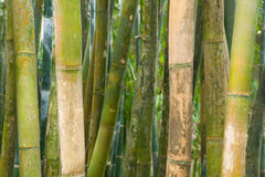 Green Bamboo Poles Stock Photography