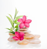 Green bamboo with red flowers and yellow river stones Stock Image