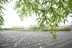 Green bamboo and road Royalty Free Stock Photo