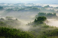 Green bamboo with sea of cloud in the morning Stock Images