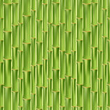 Green bamboo seamless texture Royalty Free Stock Image