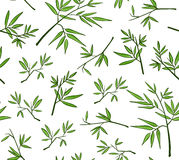 Green bamboo seamless vector pattern Stock Images