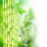 Green bamboo stems Royalty Free Stock Photos