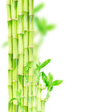 Green bamboo stems. And eaves  border isolated on white background Stock Photo