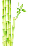 Green bamboo stems. With leaves border isolated on white background Royalty Free Stock Photography