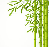 Green bamboo stems with leaves isolated on white background. Illustration Stock Photography
