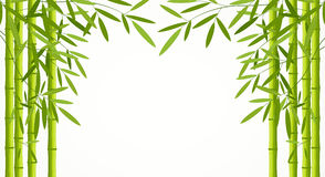 Green bamboo stems with leaves isolated on white background. Illustration Stock Image