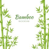 Green bamboo stems with green leaves on a white background. Vector illustration vector illustration